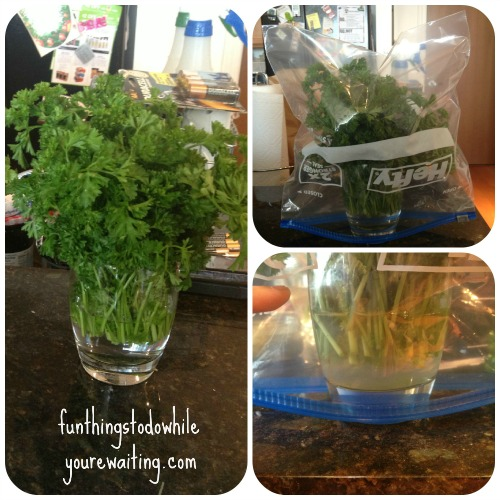 Parsley Collage