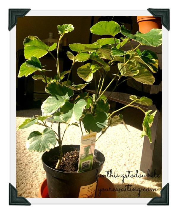 Oliver Plant