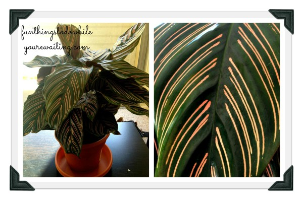 calathea collage