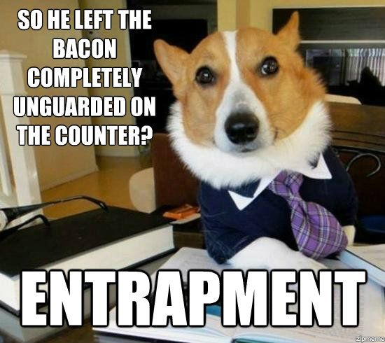 lawyer-dog-entrapment
