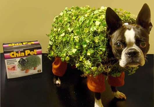 chia_pet_costume_1