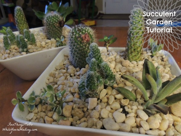a Succulent Garden