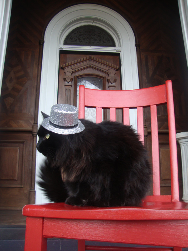 Dashing Cat in a Hat