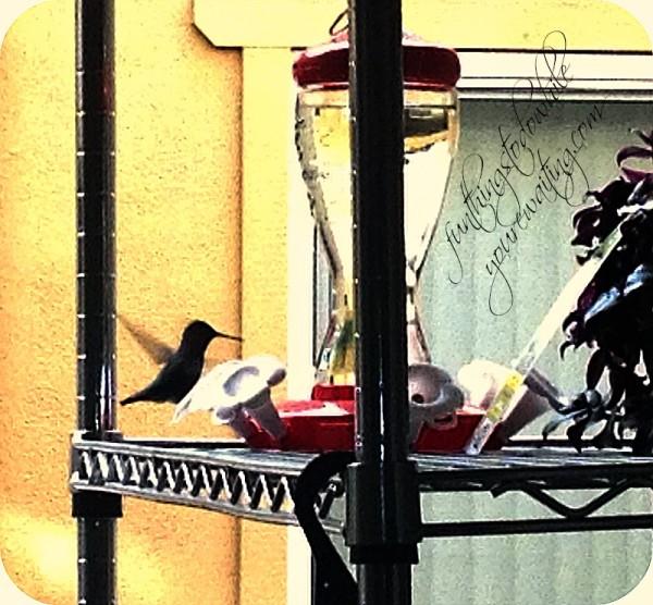 birdfinal