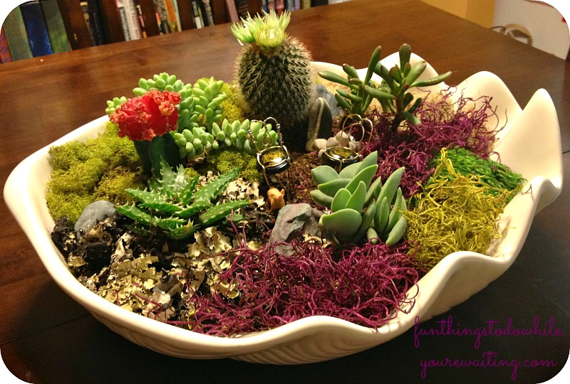 A Succulent Fairy Garden in a ceramic clam shell.