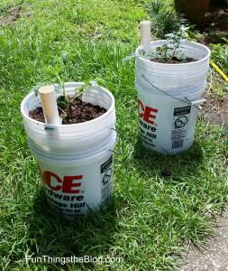 tomato buckets
