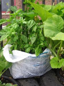 Gardening in a plastic Bag